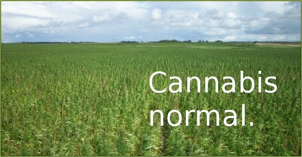 hemp_field_better_than_soy.jpg